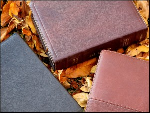 ESV Study Bible (Cowhide, Deep Brown) Regular Size
